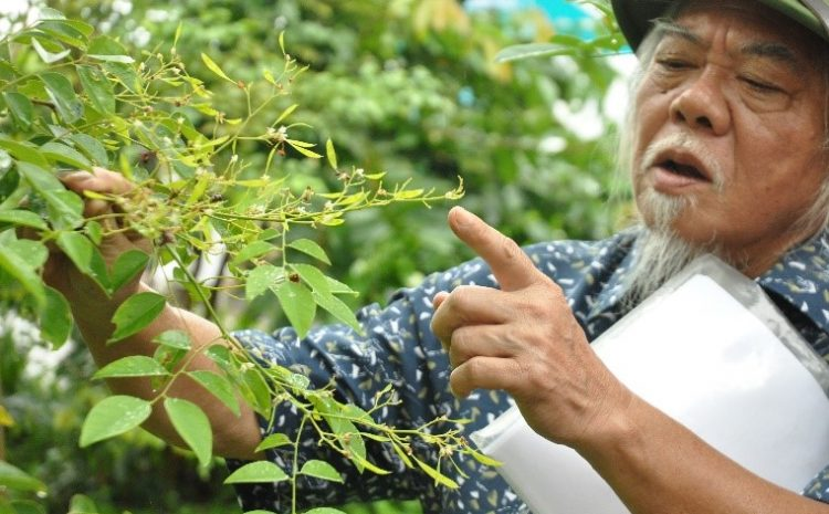 Assessment of current management practices and conservation status of Dalbergia cochinchinensis and D. oliveri in Gia Lai, Kon Tum and Dak Lak provinces