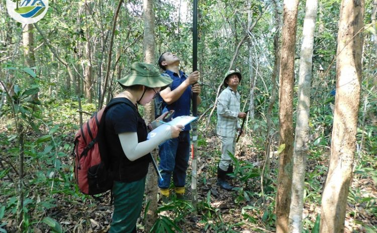 Study on distribution and natural regeneration of Dalbergia cochinchinensis and Dalbergia oliveri in Kon Tum and Binh Phuoc provinces