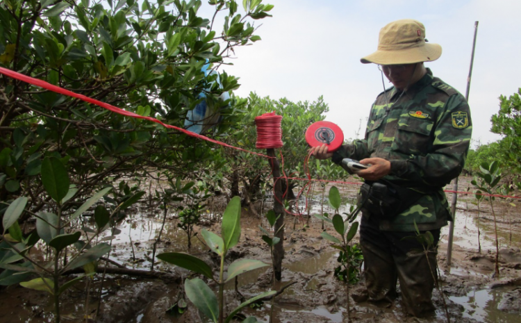 Study on mangrove degradation and select species for mangrove rehabilitation in Xuan Thuy National Park, Nam Dinh province