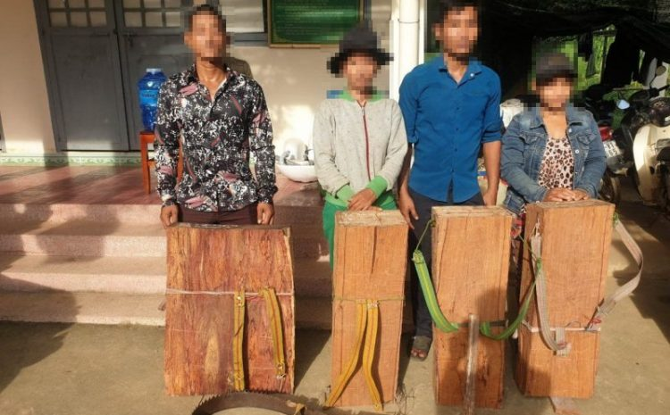 Imprisonment logger for illegally logged rosewood in Cat Tien National park