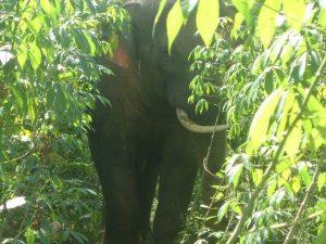 Nghiên cứu về xung đột voi-người tại Khu dự trữ sinh quyển Đồng Nai