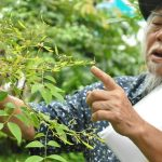 Đánh giá tình trạng bảo tồn và quản lý loài Trắc (Dalbergia cochinchinensis)  và Cẩm Lai (D. oliveri) tại Gia Lai, Kon Tum và Đắk Lắk