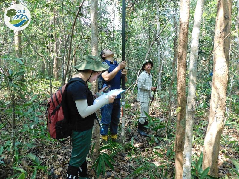 Nghiên cứu về phân bố và khả năng tái sinh tự nhiên của các loài Trắc (Dalbergia cochinchinensis) và Cẩm Lai (D. oliveri) ở tỉnh Kon Tum và Bình Phước