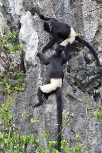 Nỗ lực trong công tác bảo tồn Voọc Mông Trắng (Trachypithecus Delacouri) cực kỳ nguy cấp và thúc đẩy du lịch sinh thái dựa vào cộng đồng tại KBTTN Vân Long, Ninh Bình