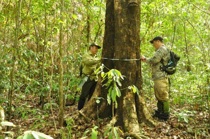 Khảo sát về phân bố và đặc điểm tái sinh tự nhiên của loài Trắc (Dalbergia cochinchinensis) và Cẩm Lai (Dalbergia oliveri) tại tỉnh Đồng Nai và Đắk Lắk