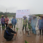 Training on mangrove forest recovery in Xuan Thuy National Park, Nam Dinh Province