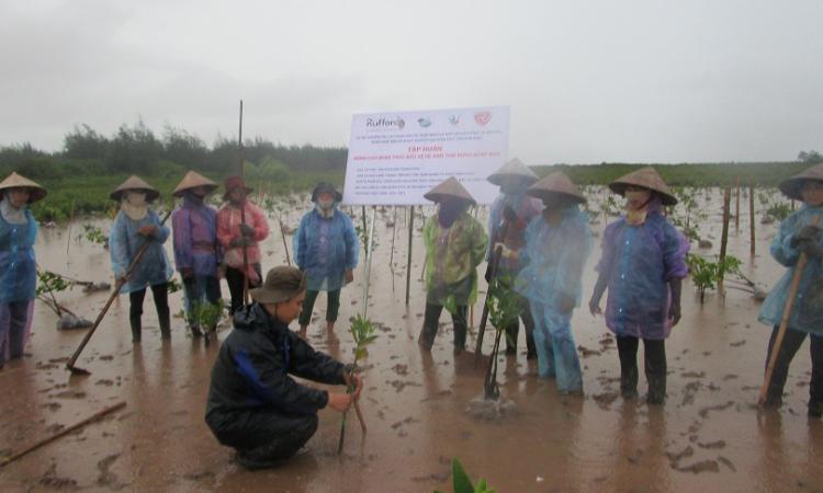 Tập huấn Khôi phục rừng ngập mặn tại vùng đệm Vườn Quốc gia Xuân Thủy, tỉnh Nam Định