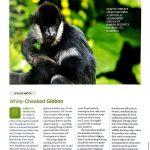 Gibbon Conservation highlight