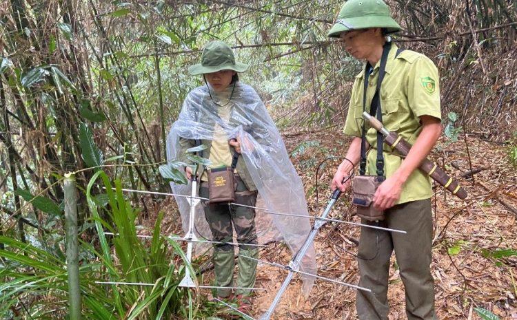 Điều tra và giám sát rùa bằng thiết bị thu phát sóng ngắn ở Khu bảo tồn Xuân Liên