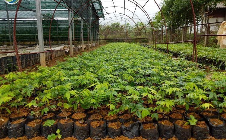 Phóng sự về Chương trình trồng rừng của Trung tâm Bảo tồn Thiên nhiên và Phát triển